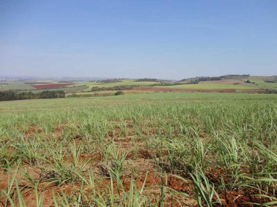Fazenda A Venda Em Porto Ferreira-sp - 7686