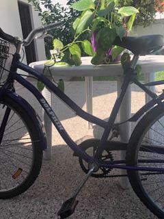 Bicicleta Dolphin Mujer