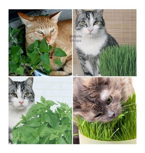 Kit Sementes De Grama E Erva Dos Gatos Catnip Promoçao
