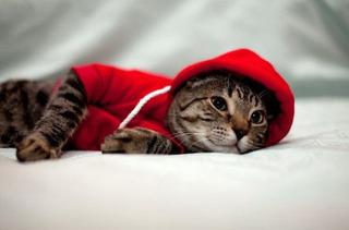 Ropa Para Gatos