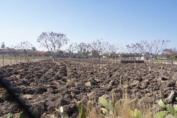 Terreno Tierra Negra Subdividido En Lotes