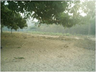 Fazenda Em Colinas - Ma, Dupla Aptidão - 331