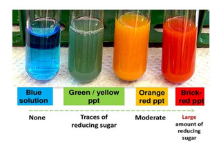 Reactivo De Benedict P/azúcares Reductores X100ml - Salttech