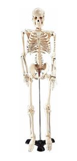 Mr. Thrifty 3 Skeleton