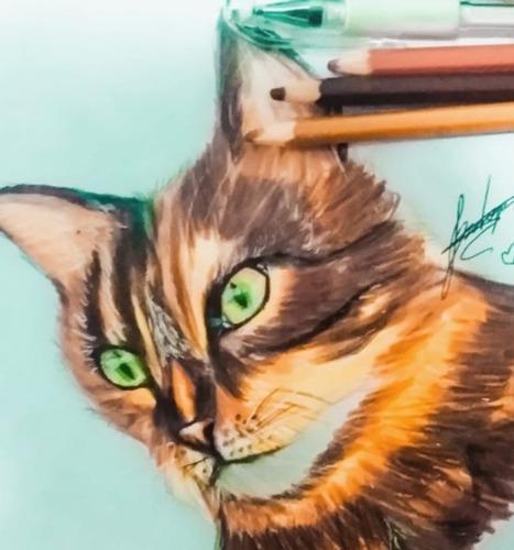 Desenhos Pet