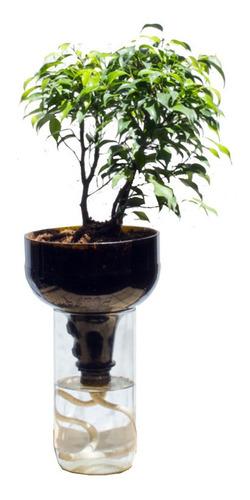 Imagen 1 de 2 de Ficus Benjamina Little Plant 27 Sin Soporte, Autorregante