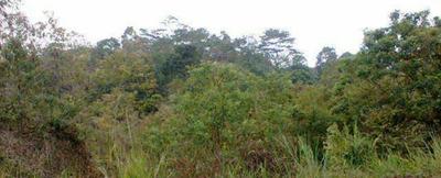 Terreno 3 Cuadras Vírgenes Cacao Montalvo Los Ríos Negociabl