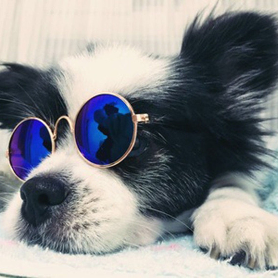 Óculos De Sol Pet Cachorros Pequenos E Gatos Diversas Cores