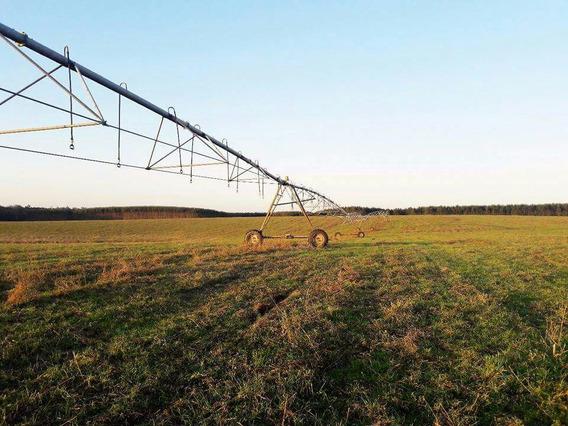 Fazenda Com 1400 Hectares Em Pantano Grande - Rs