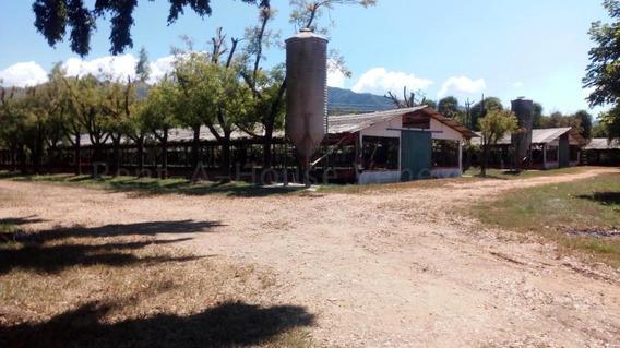 En Venta Granja En Miranda, Carabobo Mz 20-9312
