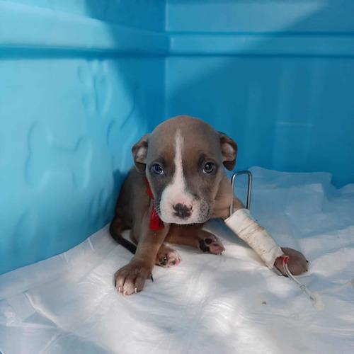Me Ajude A Salvar Minha Cachorrinha