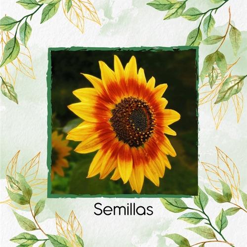 25 Semillas Flor Girasol Mix + Obsequio Germinación