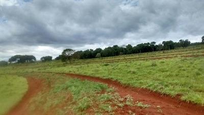 Fazenda A Venda Em Campo Grande - Ms (pecuária) - 869