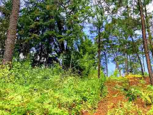 Bonito Terreno Con Vistas Al Bosque En Monte Alto.