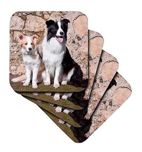 Imagen 1 de 2 de Danita Delimont  Perros  Un Adulto Border Collie Perro  U