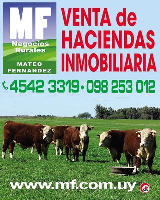Nueva Palmira 26 Has Campo Mixto, Aguadas, Monte!!