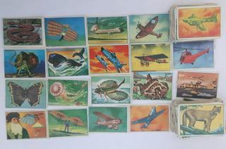 Figuritas Álbum Reino Natural X 25 A Elección Años 70
