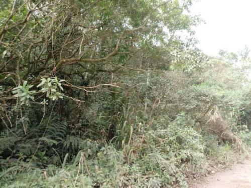 (ref:5111) Terreno Para Chácara - Itanhaém/sp - Gaivota