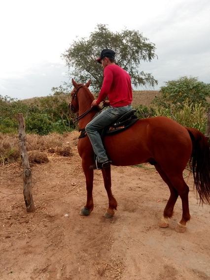 Cavalo De Vaquejada!!!pronto.