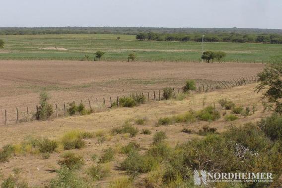 Campo - Pichi Huinca