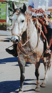 Preparo Crioulo, Couro Cru, Cavalos, Arreios, Redeas, Luxo