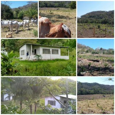 Fazenda Muito Boa Para Pecuária Em Bodoquena Ms 276 Hectares