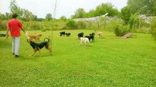 Peluqueria Y Guarderia Canina Huellita