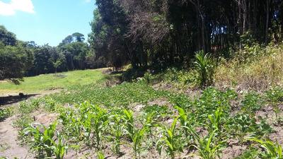 D Terrenos Em Ibiuna Cercado Pela Natureza E Demarcados