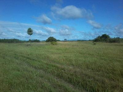 Fazenda A Venda Em Pantanal - Ms (pecuária) - 1106