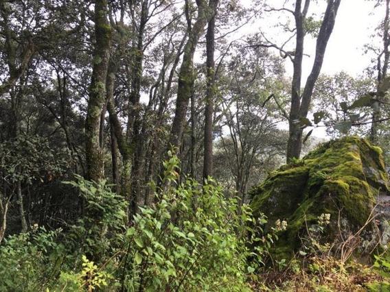 Terreno En Venta Lugar Hermoso Donde Tus Sueños Se Hacen Realidad, Construye Tu Cabaña En El Bosq