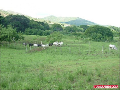 Haciendas - Fincas En Venta Tinaquillo-cojedes Codigo:320850