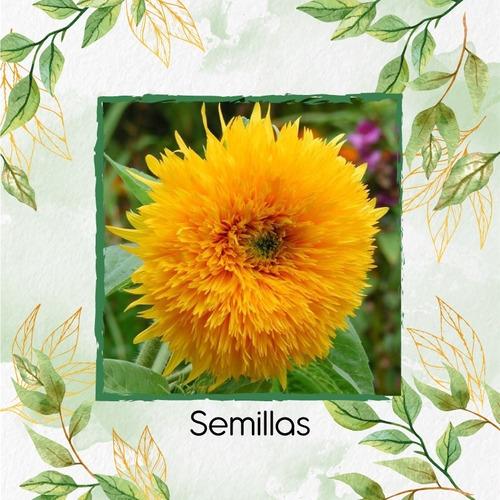 20 Semillas Flor Girasol Enano + Obsequio Germinación