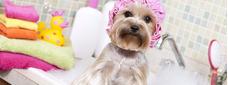 Servicios De Belleza Para Tu Mascota