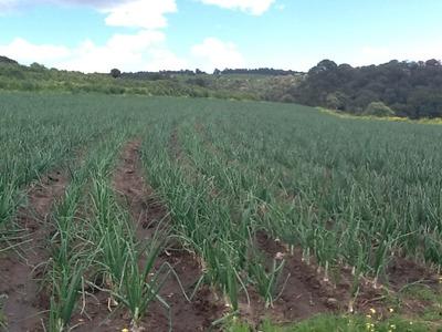 Remato Rancho 18 Hectareas Cultivo Produciendo Con Jaguey