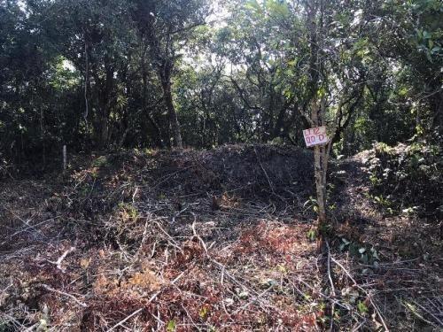 Ótimo Terreno No Bairro Jardim Regina Em Itanhaém - 6507
