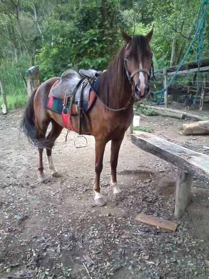 Cavalo Pequira