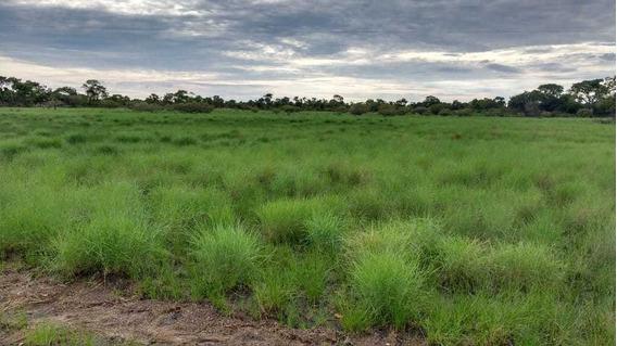 Fazenda Buriti