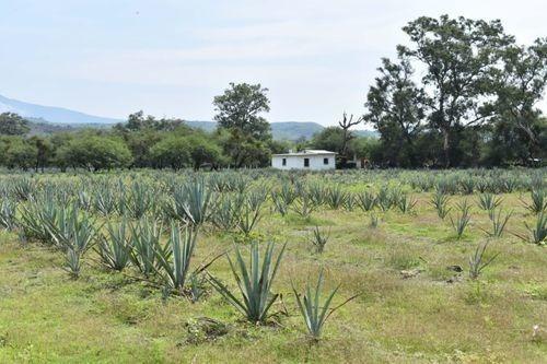 Rancho/hacienda En Venta En La Estanzuela