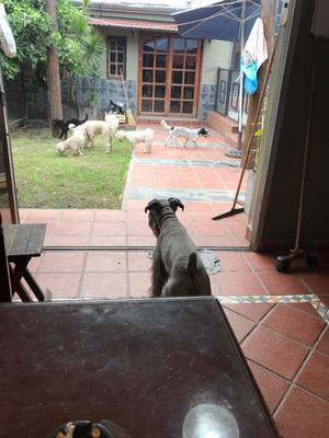 Hospedaje Canino Como En Casa !