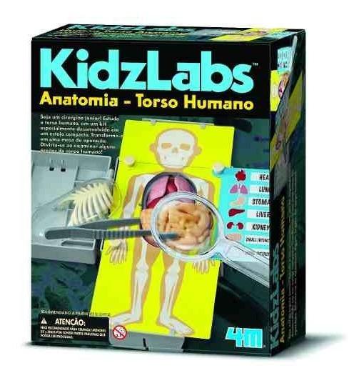 Anatomia - Torso Humano - 4m