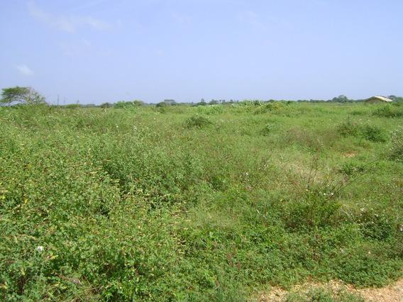 Terreno 1250 M2 Chichiriviche Rancho Maria Antonia