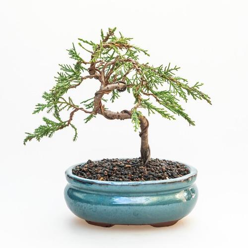 Bonsai  7-8 Años /diferentes Especies