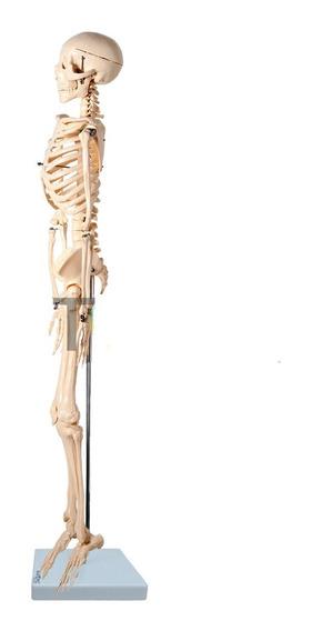 Esqueleto Articulado 85 Cm Anatomic