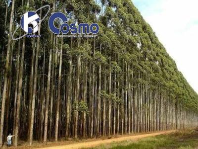 Fazenda Mega De Eucalipto, A Venda, A 220 Km De 3 Lagoas - Ms - Fa00081 - 33593984