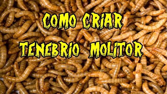 Tenebrios Kit Completo Iniciar Sua Criação 135,99 1000 Larva