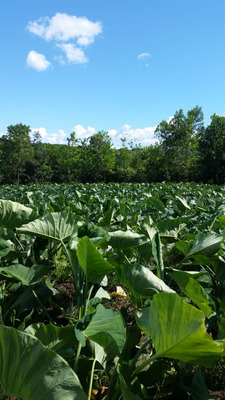 Finca Agrícola En Los Hidalgos Bayaguana