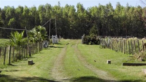 Venta Campo De 48 Hectáreas A 50 Km. De Colonia.