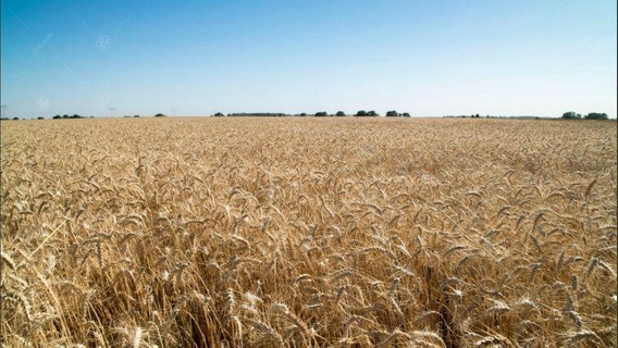 Campo 100% Agricola - 1000 Has En Gral Lamadrid - Renta Asegurada!
