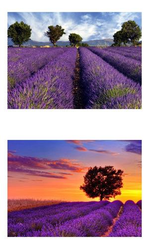 Imagem 1 de 7 de 30 Sementes Importadas De Alfazema Lavanda Francesa Flor