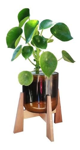 Planta Interior Cuchara Little Terrario 16 Con Soporte